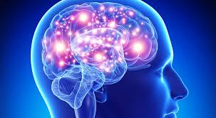 images-cerveau.jpg